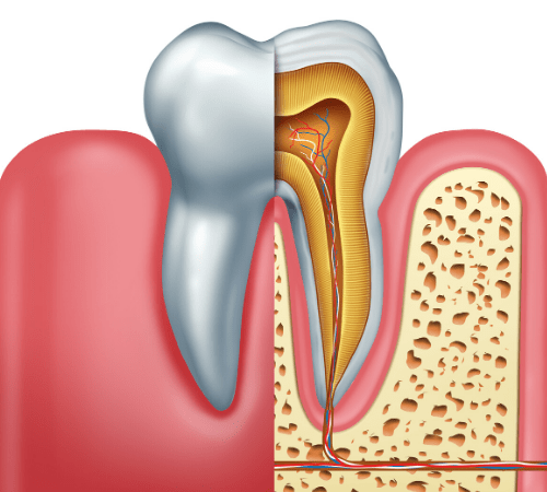 A graphic showing the inside of a tooth to demonstrate root canals in Edgewater, NJ
